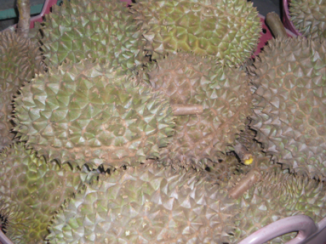 durian_small.png